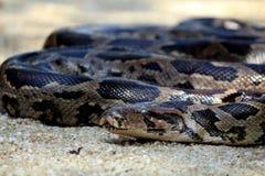 Python Imagen de archivo