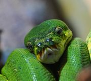 python imagenes de archivo