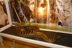 python photos stock