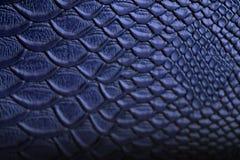 Python bleu en cuir de texture Photographie stock libre de droits