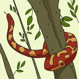 Python curled around tree in the forest. Vector graphics. royalty free illustration