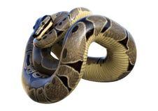 python de boule du rendu 3D sur le blanc Image libre de droits
