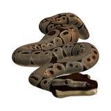 python de boule du rendu 3D sur le blanc Photos stock