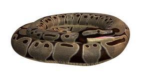 python de boule du rendu 3D sur le blanc Photo stock