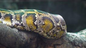 Python en las ramas almacen de video