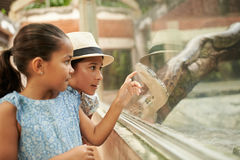 Python. Indonesian girls pointing at python in terrarium Royalty Free Stock Photography