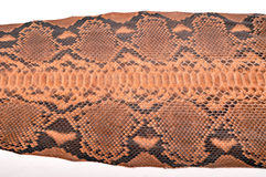 Python leather Royalty Free Stock Photos
