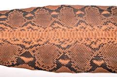 Python leather Royalty Free Stock Photos