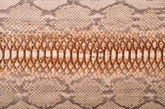 Python leather Royalty Free Stock Photo