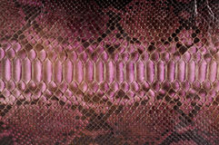 Python leather Royalty Free Stock Images
