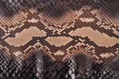 Python leather Stock Images