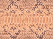 Python leather Royalty Free Stock Image
