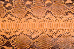 Python leather Royalty Free Stock Photography