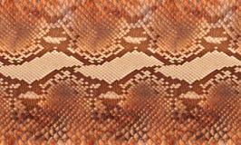 Python leather Stock Image