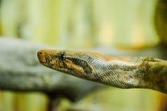 python repéré image stock