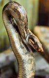 python repéré photos libres de droits