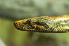 python repéré photo stock