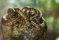 python repéré images stock