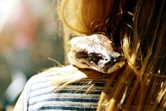 Reptiles and humans, relationship stock photo
