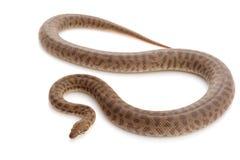 python s stimson Στοκ φωτογραφίες με δικαίωμα ελεύθερης χρήσης