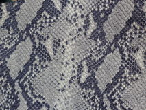 Python skin patch Stock Image