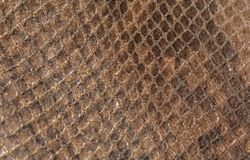 Python Skin. Skin of a Snake or Reptile royalty free stock photography
