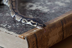 Python snake on vintage book Stock Images