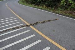 Python sur la route principale photos stock