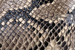 Python texture Stock Images