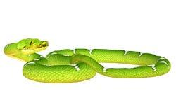 Python vert d'arbre image stock
