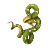 Python vert d'arbre sur le blanc Photographie stock