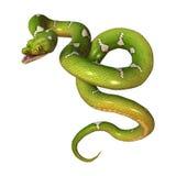 Python vert d'arbre sur le blanc Image libre de droits