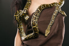 Pythons Stock Photo