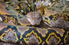 Pythonschlange stockbild