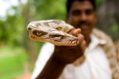 Pythonschlange stockfoto