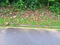 pythonschlange lizenzfreie stockfotografie
