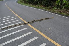 Pythonschlange auf der Hauptstraße stockfotos
