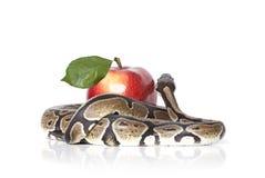 Pythonschlange-Schlange mit Apfel lizenzfreie stockfotos