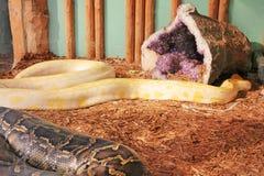 Pythonschlangen auf Anzeige an einem Garten in South Dakota lizenzfreies stockbild