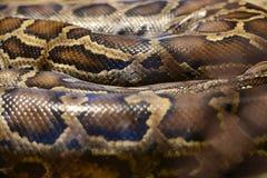 Pythonschlangenhaut Lizenzfreie Stockfotos