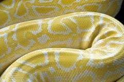 Pythonschlangenhaut Stockfoto