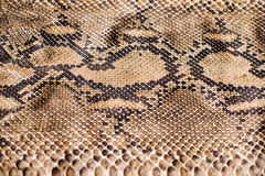 Pythonschlangenschlangenhautmuster Lizenzfreie Stockfotografie