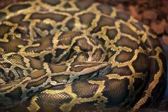 Pythonschlangenschlangenschlaf stockfotos