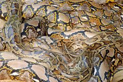 Pythonschlangestapel Stockbilder