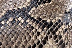Pytonormtextur Arkivbilder