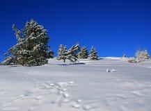 q krajobrazowa zima Zdjęcie Royalty Free