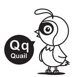 Q Quail cartoon and alphabet for children to learning and colori Royalty Free Stock Photos