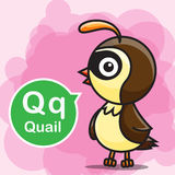 Q Quail color cartoon and alphabet for children to learning vect Stock Photography