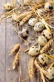 Qail鸡蛋 免版税库存图片