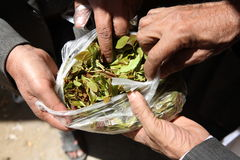 Free Qat For Sale Royalty Free Stock Photo - 4773515